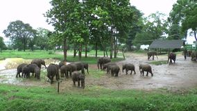 Olifanten in het Nationale Park van Udawalawe stock video