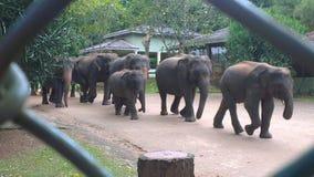 Olifanten in het park Stock Afbeelding