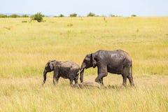 Olifanten met kalf op de savanne Stock Fotografie