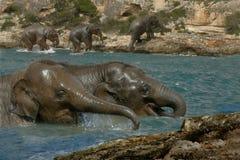 Olifanten neer door de rivier Stock Afbeeldingen