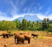 Olifanten in park Pinawella op Sri Lanka stock afbeeldingen