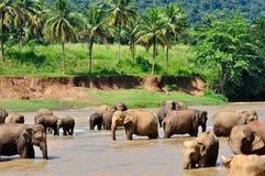 Olifanten in rivier Stock Afbeeldingen