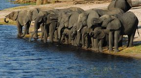 Olifanten in Waterhole Royalty-vrije Stock Foto's