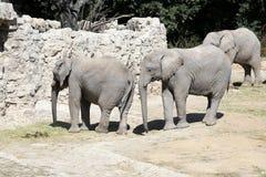 Olifantenfamilie in Dierentuin Stock Afbeeldingen