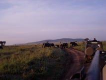 Olifantenkudde op Afrikaanse savanne Stock Foto's