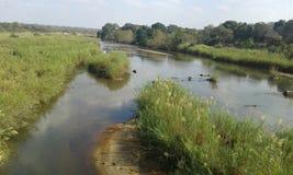 Olifants河 库存图片