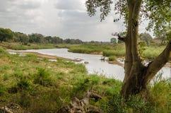 Olifants-Fluss, Nationalpark Kruger, Südafrika Lizenzfreie Stockfotografie