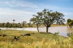 Olifants-Fluss, Nationalpark Kruger, Südafrika Lizenzfreie Stockbilder