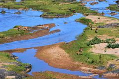 The Olifants river royalty free stock images