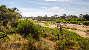 Olifants river riverbad, Kruger National Park,  South africa Royalty Free Stock Image