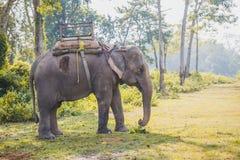 Olifants Wachtende Toerist voor Wildernissafari royalty-vrije stock afbeelding