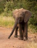 Olifantsbaby die onderaan een landweg lopen stock fotografie