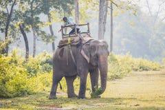 Olifantsbewaarder - Mahout in het Nationale Park van Chitwan, Nepal royalty-vrije stock foto