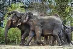 Olifantsfamilie, Maasai Mara Nature Reserve, Kenia, Afrika Royalty-vrije Stock Foto's
