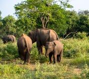 Olifantsfamilie op safari royalty-vrije stock afbeelding