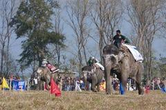 Olifantsfestival, Chitwan 2013, Nepal Royalty-vrije Stock Foto