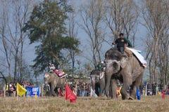 Olifantsfestival, Chitwan 2013, Nepal Stock Foto