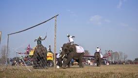 Olifantsfestival, Chitwan 2013, Nepal Royalty-vrije Stock Fotografie