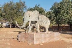 Olifantshoek大象角落,北的镇大象  免版税库存图片