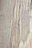 Olifantsivoor - Close-up - Artistieke en Unieke Achtergrond van Afrika stock afbeeldingen