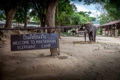 Olifantskamp Royalty-vrije Stock Foto