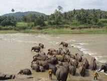 Olifantskudde het baden in de rivier Royalty-vrije Stock Afbeelding