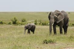 Olifantsmoeder en baby, Maasai Mara, Kenia, Afrika stock foto's