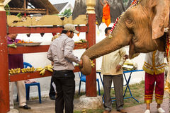 Olifantsoptocht voor Lao New Year 2014 in Luang Prabang, Laos Royalty-vrije Stock Foto's