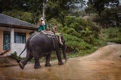 Olifantsreis, Phuket - Thailand Royalty-vrije Stock Foto's