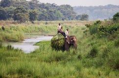 Olifantsruiters in het Nationale Park van Chitwan Royalty-vrije Stock Foto's