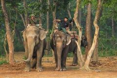 Olifantstaxi Het lopen langs het nationale park op olifanten stock afbeeldingen