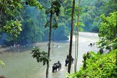 Olifantstrekking in het Nationale Park van Gunung Leuser van Sumatra, Ind. Royalty-vrije Stock Foto
