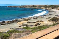 Olifantsverbindingen op het strand, San Simeon, Californië Stock Fotografie
