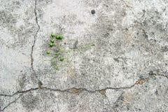 Olijf op beton Royalty-vrije Stock Foto
