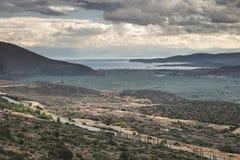 Olijfbomen in Delphi, Griekenland Stock Afbeelding