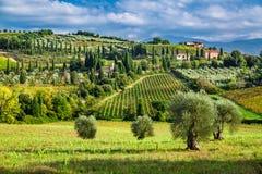 Olijfbomen en wijngaarden in een klein dorp in Toscanië stock foto's