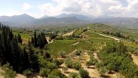 Olijfbomen en Wijngaarden in Griekenland van Koutsi Nemea stock videobeelden