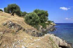 Olijfbomen op de Egeïsche kust Royalty-vrije Stock Afbeeldingen