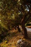 Olijfbomen, overzees en zonsondergang Kalamata, Griekenland Royalty-vrije Stock Foto