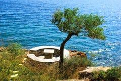 Olijfboom dichtbij het overzees Stock Fotografie