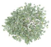 Olijfboom met olijven op wit worden geïsoleerd dat Hoogste mening vector illustratie