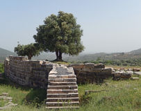 Olijfboom op een oude archeologische plaats in Griekenland Stock Fotografie