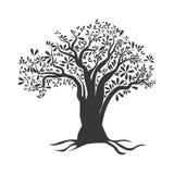 Olijfboompictogram Organisch en Gezond voedselontwerp Grafische vector royalty-vrije illustratie