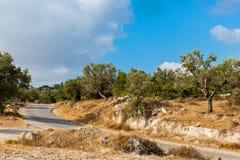 Olijfgaard dichtbij Jeruzalem stock afbeeldingen