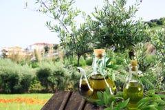 Olijfolie in de tuin Stock Foto's
