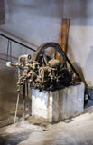 Olijfoliefabriek Stock Fotografie