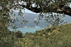 Olijftak met een achtergrond van de heuveltop op het overzees stock afbeeldingen