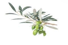 Olijftak met Groene olijven met bladeren De ruimte van het exemplaar Stock Afbeeldingen