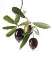 Olijven die olijfolie afscheiden Stock Afbeelding