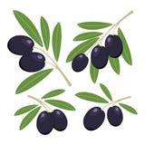 olijven Reeks donkere olijven met groene bladeren Stock Fotografie
